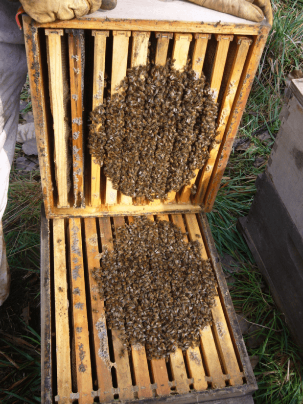 Кластер пчел 2