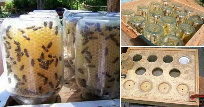 Пчелы строят соты в банке