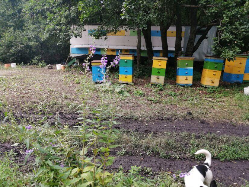 Ульи перед главным прицепом с пчелами