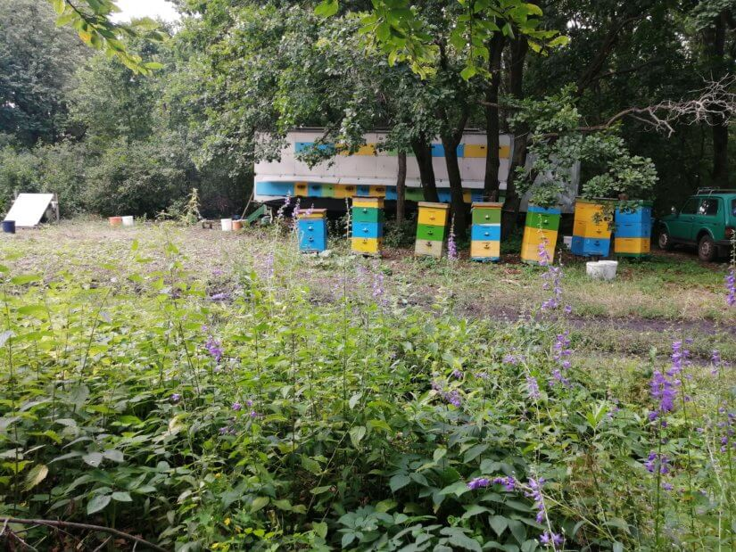 Прицеп с пчелами среди лесного разнотравья