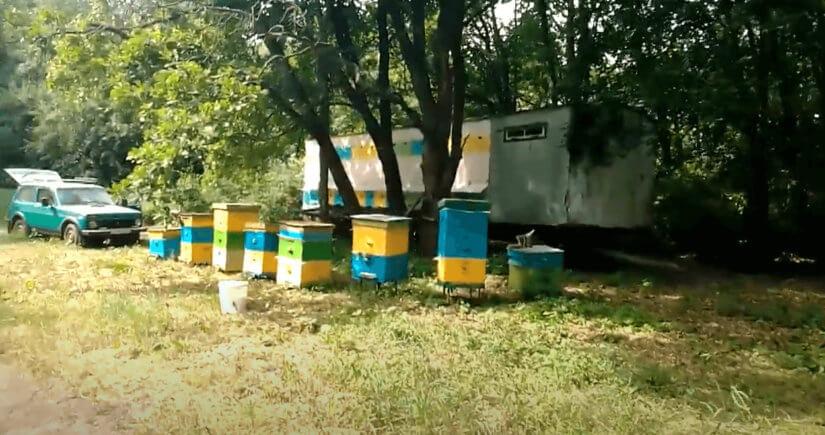 Сбор мёда на луговом разнотравье