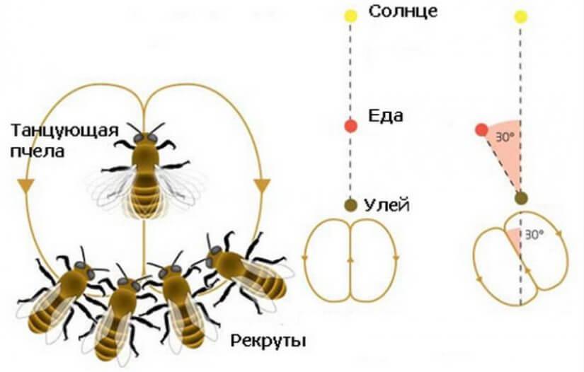 Танец пчелы 2