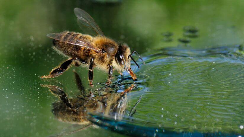 Вода в улье