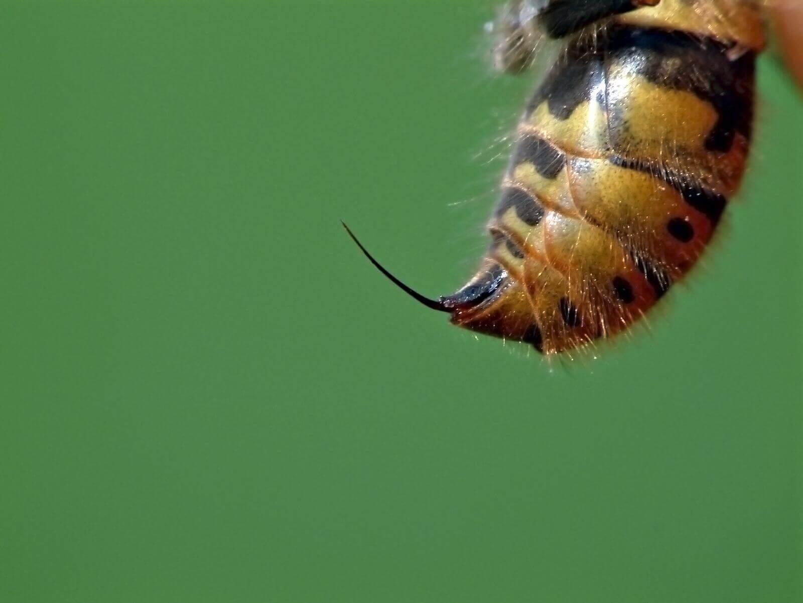 Жало пчёл