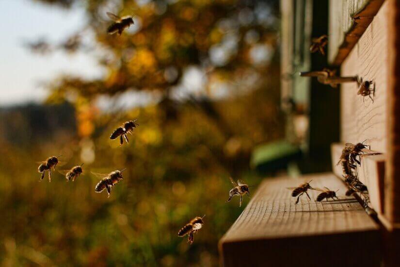 Улья пчёл