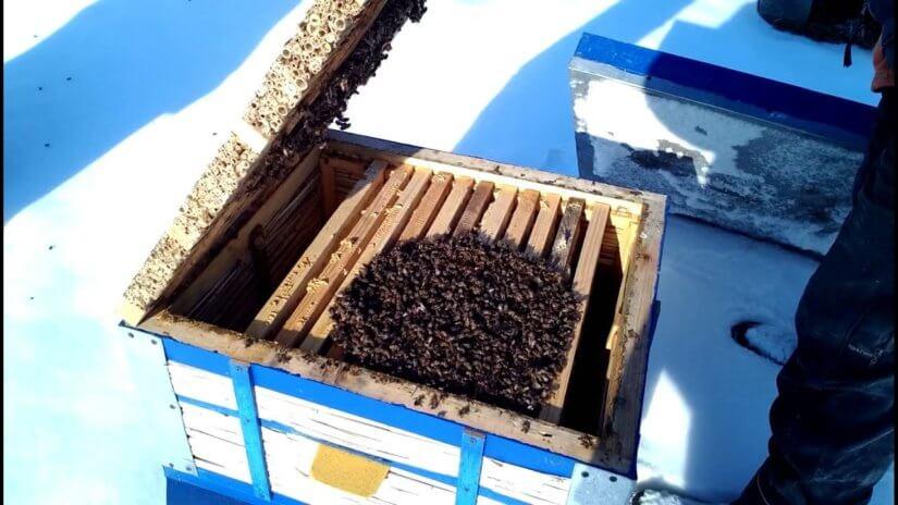 кластер пчел