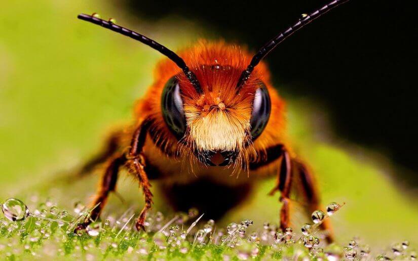 Экзотические сорта мёда