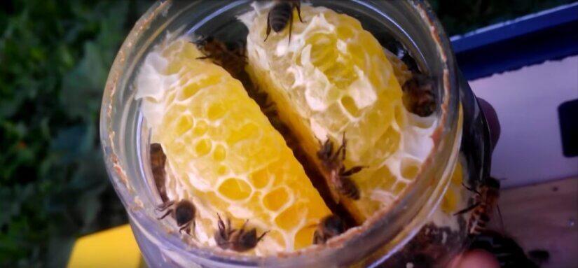 Строительство сот пчелами в банке