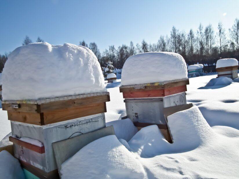 Зимовка пчел в ульях