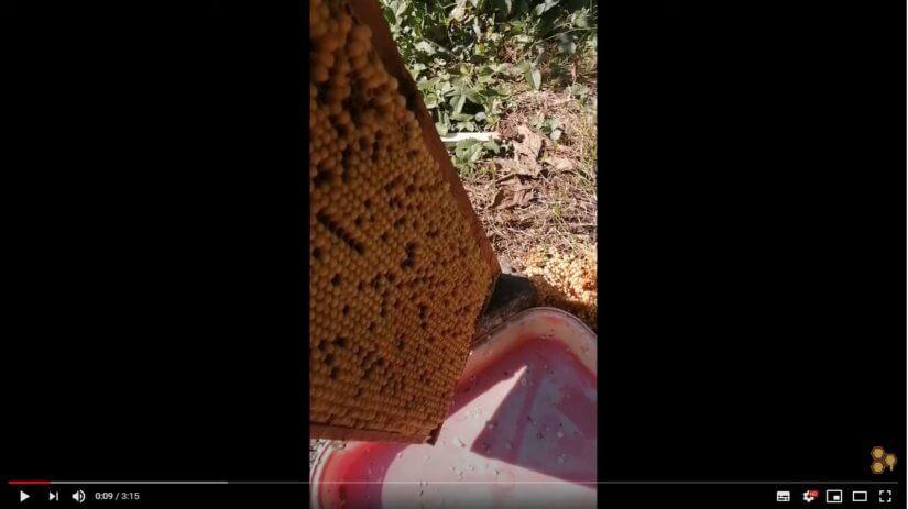 Трутни и их роль в жизни пчёл